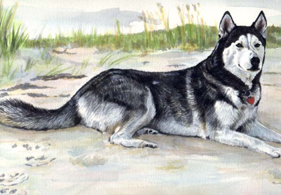 Alaskan Malamute Dog Beach Watercolor Pet Portrait Carol Wells