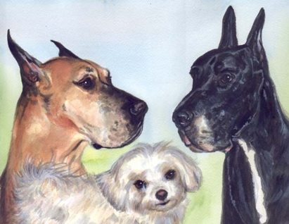 Great Dane Dogs Watercolor Carol Wells