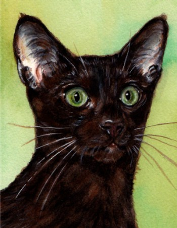 Havana Brown Cat Watercolor Carol Wells