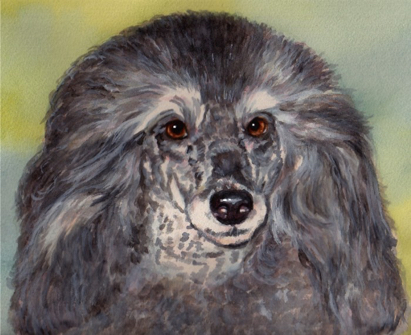Poodle Dog Watercolor Carol Wells