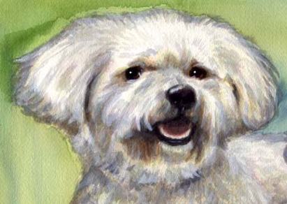 Bichon Dog Pet Watercolor Portrait Carol Wells
