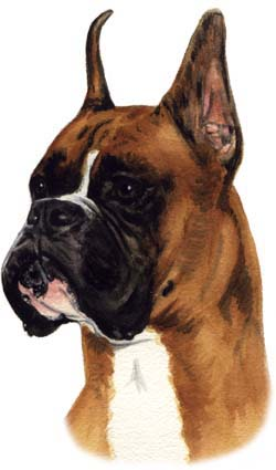 Boxer Dog Watercolor Pet Portrait Carol Wells