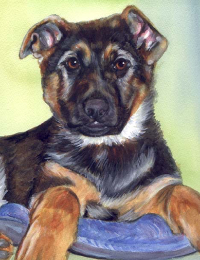 German Shepherd Puppy Watercolor Carol Wells