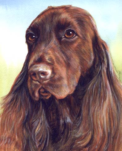Field Spaniel Dog Watercolor Portrait Carol Wells