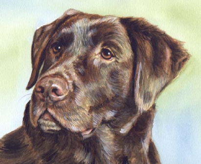 Chocolate Lab Watercolor Pet Portrait Carol Wells