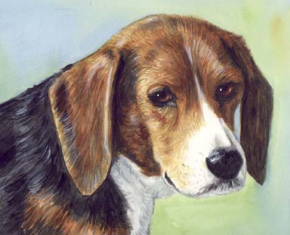 Beagle Dog Watercolor Pet Portrait Carol Wells