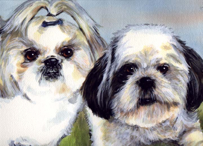 Shih Tzu Dogs Watercolor Carol Wells