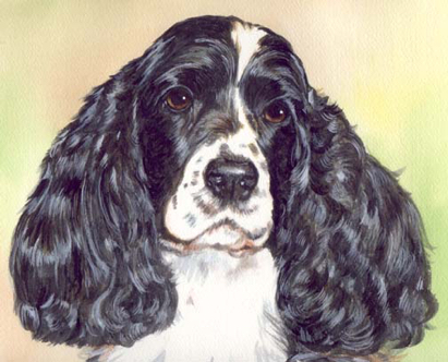 Cocker Spaniel Dog Watercolor Portrait Carol Wells