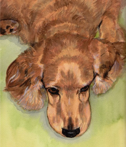 Cocker Spaniel Dog Watercolor Carol Wells