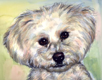 Bichon Dog Watercolor Portrait Carol Wells