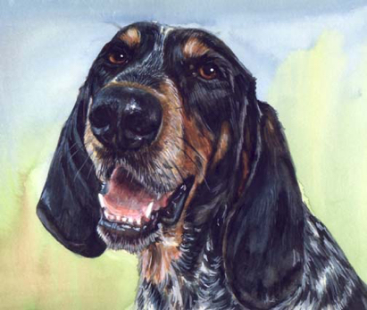 Hound Coon Dog Watercolor Portrait Carol Wells