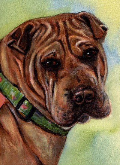 Sharpei Dog Watercolor Carol Wells
