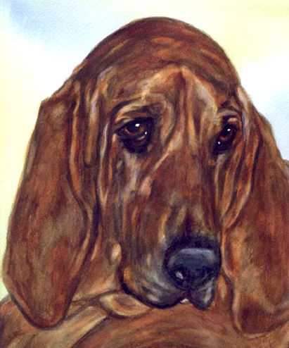 Bloodhound Dog Watercolor Portrait Carol Wells