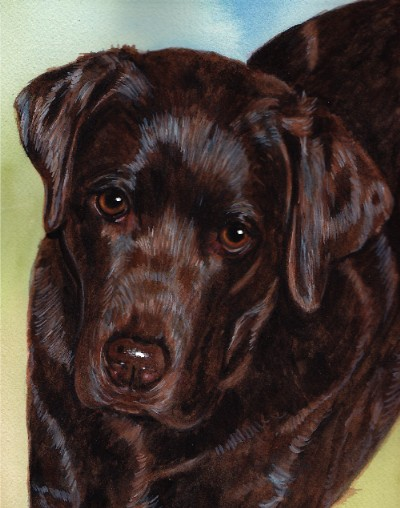 Chocolate Lab Dog Watercolor Carol Wells