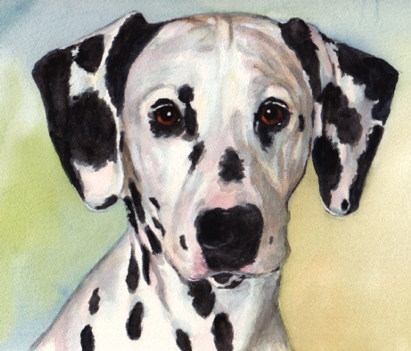 Dalmatian Dog Watercolor Carol Wells