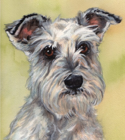 White Schnauzer Dog Watercolor Carol Wells