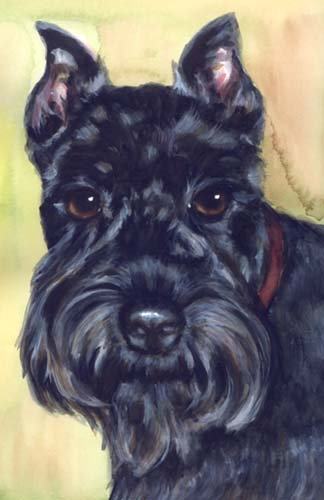 Scottish Terrier Watercolor Portrait Carol Wells