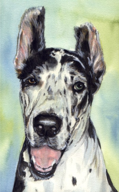 Great Dane Dog Blue Eye Watercolor Pet Portrait Carol Wells