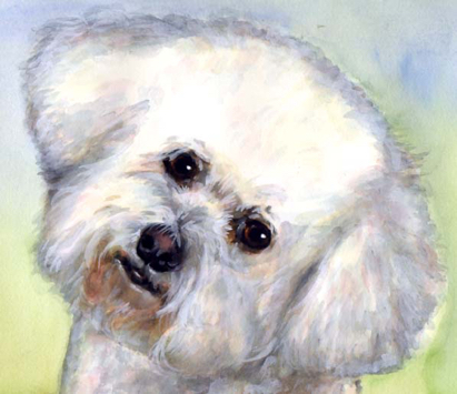 Bichon Dog Watercolor Carol Wells