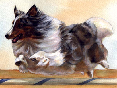 Collie Agility Dog Watercolor Carol Wells
