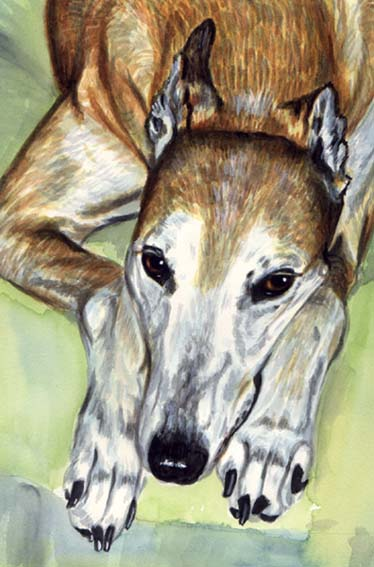 Greyhound Dog Watercolor Pet Portrait Carol Wells
