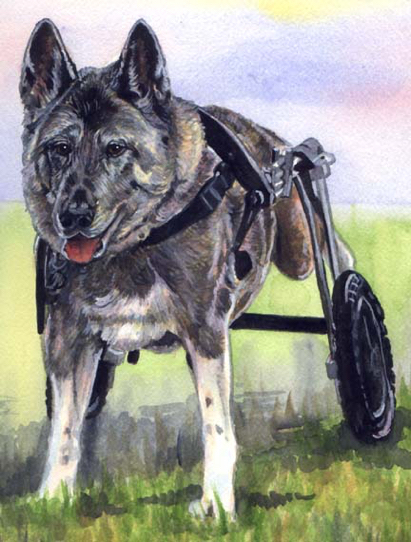 Dog Wheel Legs Malinois Watercolor Carol Wells