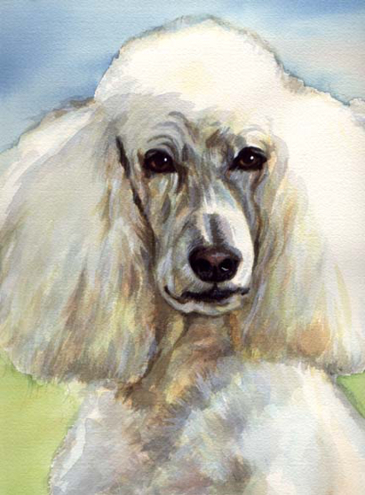 Standard Poodle Dog Pet Watercolor Carol Wells