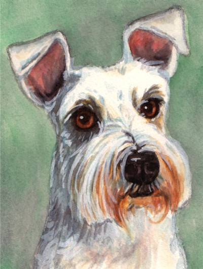 White Scottish Terrier Dog Watercolor Carol Wells
