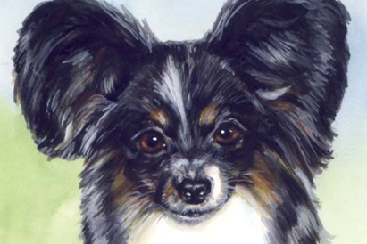 Papillon Dog Watercolor Carol Wells