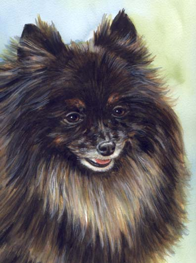 Pomeranian Dog Watercolor Pet Portrait Carol Wells