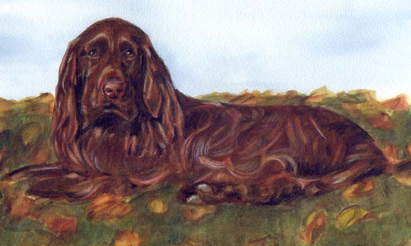 Field Spaniel Dog Watercolor Carol Wells