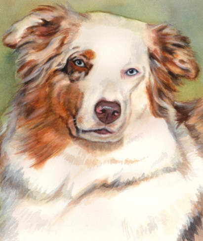 Australian Shepherd Blue Eyes Dog Watercolor Carol Wells