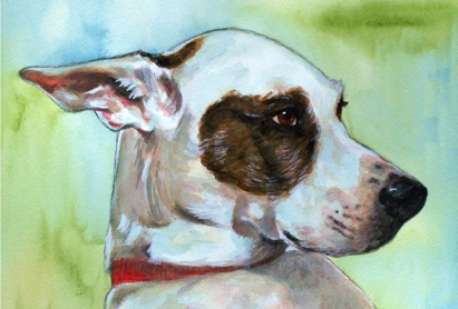 Dog Eye Patch Watercolor Carol Wells
