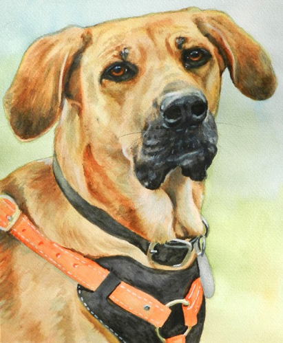 Search Rescue Dog Watercolor Carol Wells
