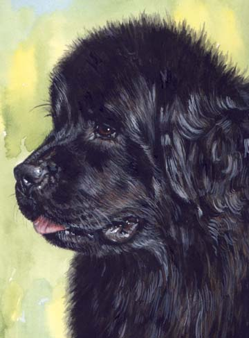 Newfoundland Newfie Dog Watercolor Pet Portrait Carol Wells