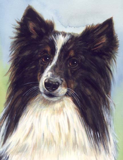 Sheltie Dog Watercolor Carol Wells