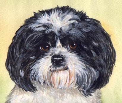 Shih Tzu Dog Watercolor Pet Portrait Carol Wells