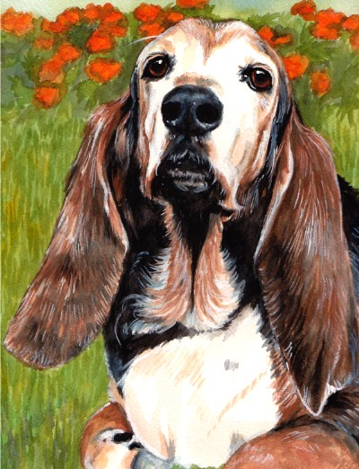 Basset Hound Dog Watercolor Carol Wells