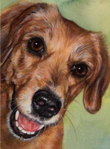Dog Art Watercolor Carol Wells