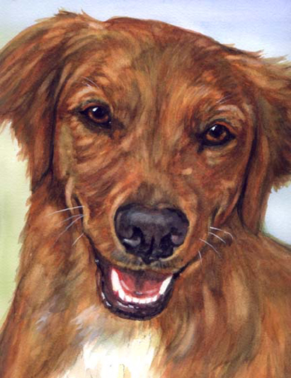Dog Pet Portrait Watercolor Carol Wells