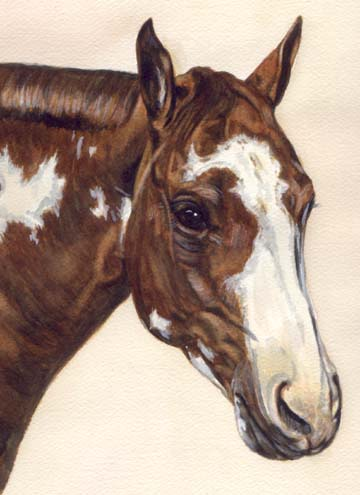 Paint Horse Watercolor by Carol Wells