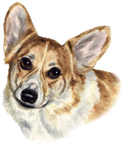 Corgi Dog Watercolor Portrait Carol Wells
