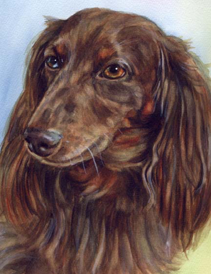 Longhaired Dachshund Blue Brown Eyes Dog Watercolor Carol Wells