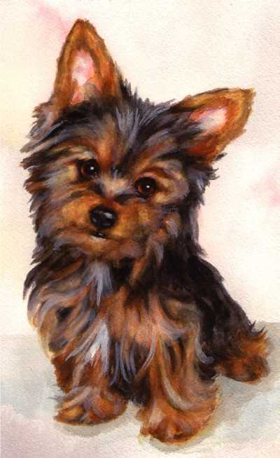 Yorkshire Terrier Puppy Yorkie Dog Watercolor Carol Wells
