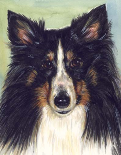 Sheltie Dog Watercolor Pet Portrait Carol Wells