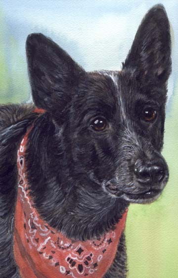Skidboot Cowboy Dog Heeler Watercolor Portrait Carol Wells
