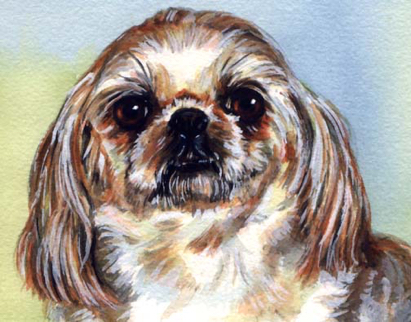 Lhasa Apso Dog Watercolor Carol Wells