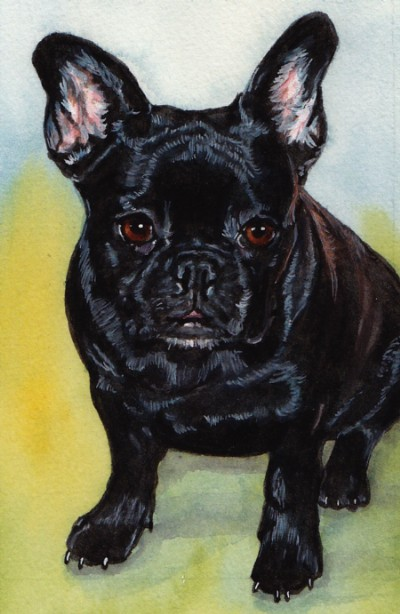 Black French Bulldog Painting Watercolor Carol Wells
