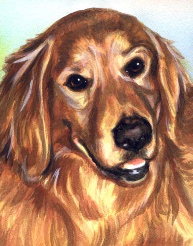 Golden Retriever Dog Watercolor Portrait Carol Wells
