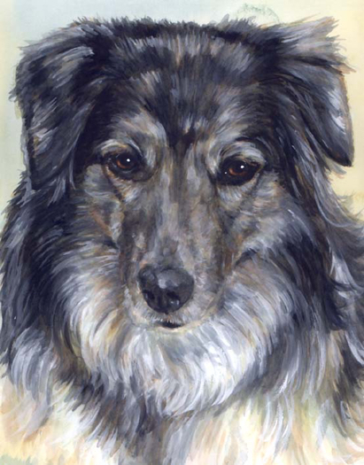 Australian Shepherd Dog Watercolor Portrait Carol Wells